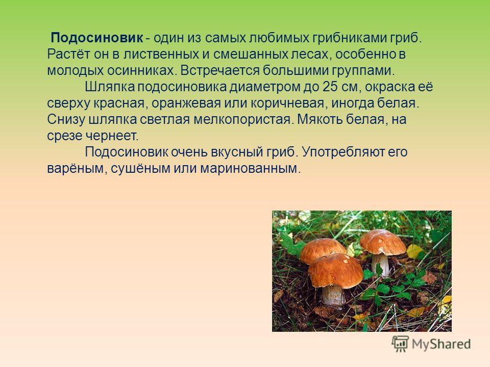 Подосиновик - один из самых любимых грибниками гриб. Растёт он в лиственных и смешанных лесах, особенно в молодых осинниках. Встречается большими группами. Шляпка подосиновика диаметром до 25 см, окраска её сверху красная, оранжевая или коричневая, и