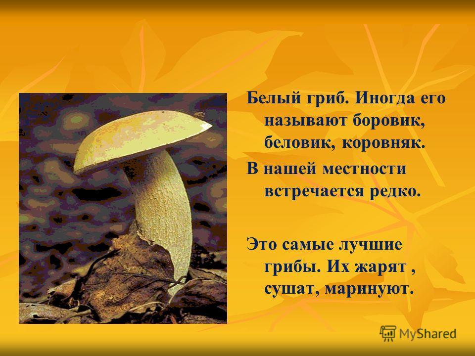 Белый гриб. Иногда его называют боровик, беловик, коровняк. В нашей местности встречается редко. Это самые лучшие грибы. Их жарят, сушат, маринуют.