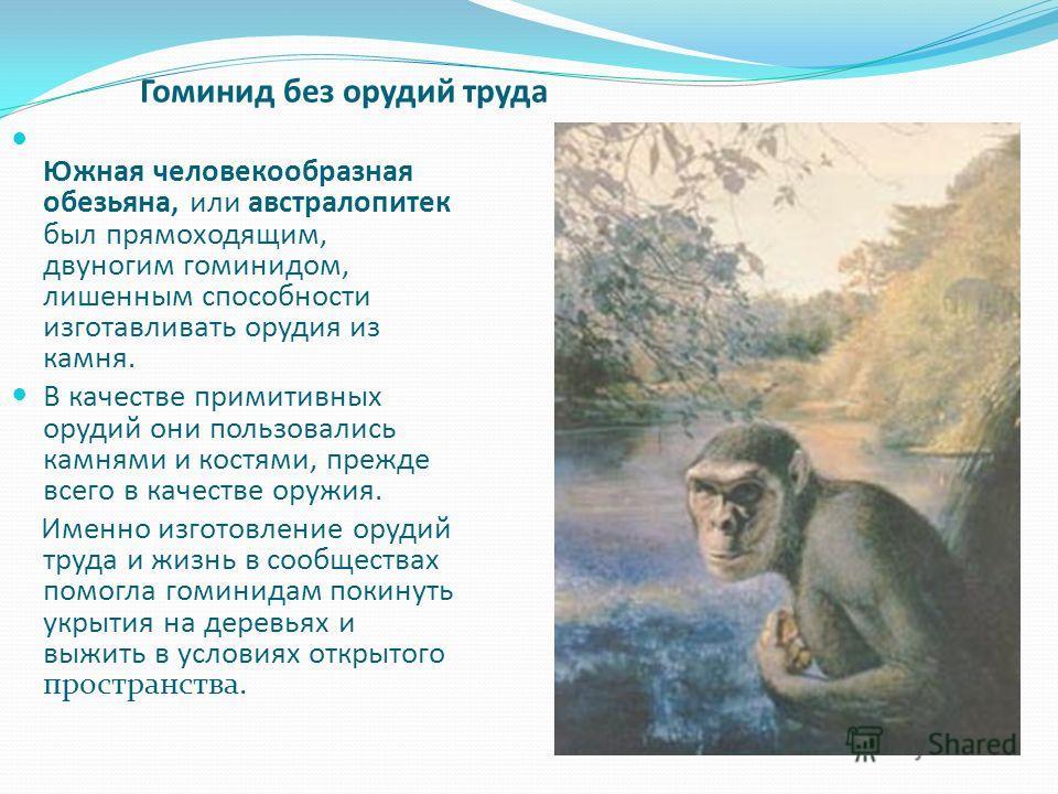 Южная человекообразная обезьяна, или австралопитек был прямоходящим, двуногим гоминидом, лишенным способности изготавливать орудия из камня. В качестве примитивных орудий они пользовались камнями и костями, прежде всего в качестве оружия. Именно изго