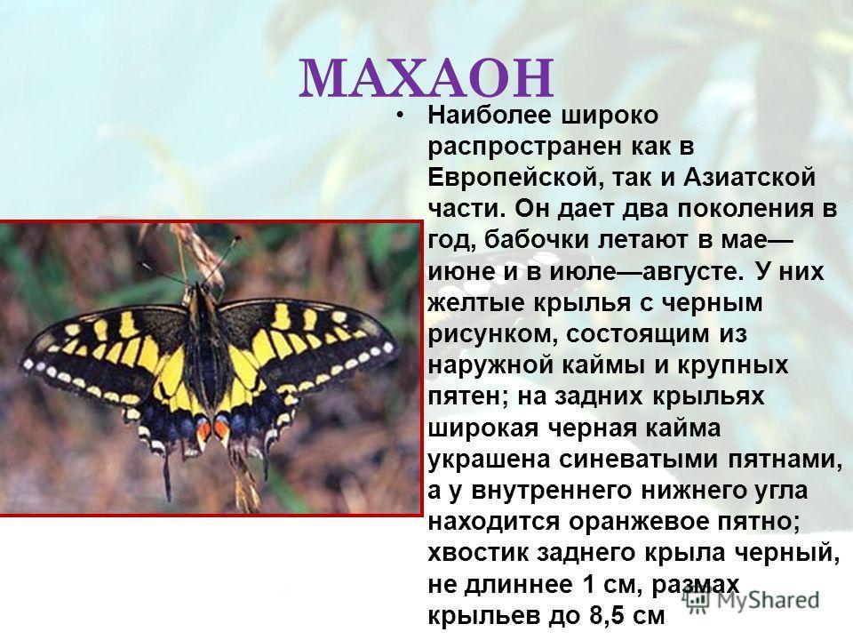 МАХАОН Наиболее широко распространен как в Европейской, так и Азиатской части. Он дает два поколения в год, бабочки летают в мае июне и в июлеавгусте. У них желтые крылья с черным рисунком, состоящим из наружной каймы и крупных пятен; на задних крыль
