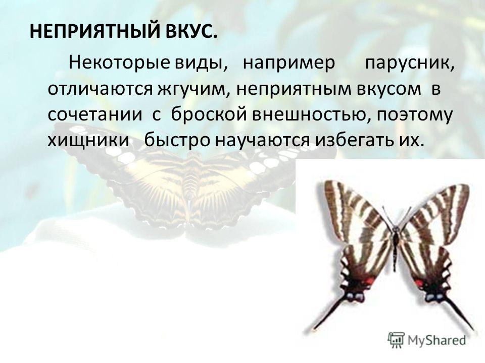 НЕПРИЯТНЫЙ ВКУС. Некоторые виды, например парусник, отличаются жгучим, неприятным вкусом в сочетании с броской внешностью, поэтому хищники быстро научаются избегать их.