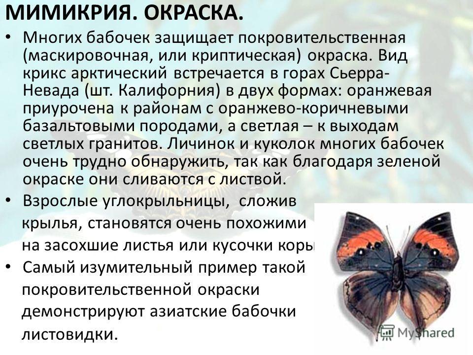 МИМИКРИЯ. ОКРАСКА. Многих бабочек защищает покровительственная (маскировочная, или криптическая) окраска. Вид крикс арктический встречается в горах Сьерра- Невада (шт. Калифорния) в двух формах: оранжевая приурочена к районам с оранжево-коричневыми б