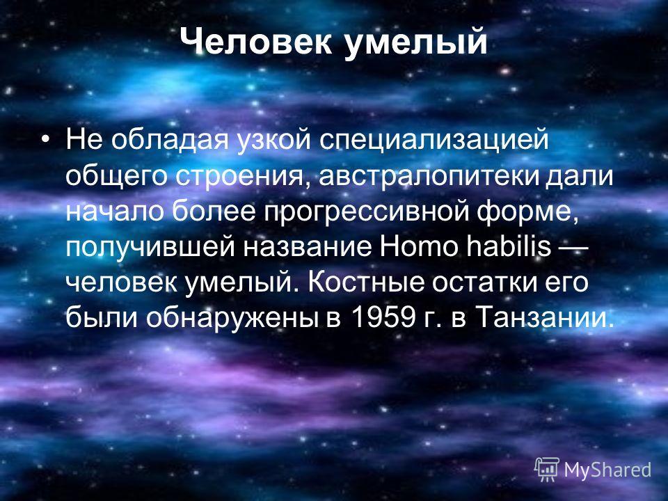 Человек умелый Не обладая узкой специализацией общего строения, австралопитеки дали начало более прогрессивной форме, получившей название Homo habilis человек умелый. Костные остатки его были обнаружены в 1959 г. в Танзании.