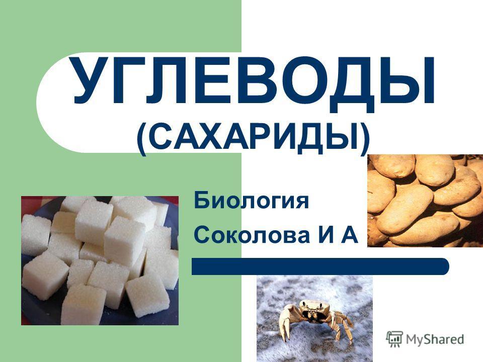УГЛЕВОДЫ (САХАРИДЫ) Биология Соколова И А