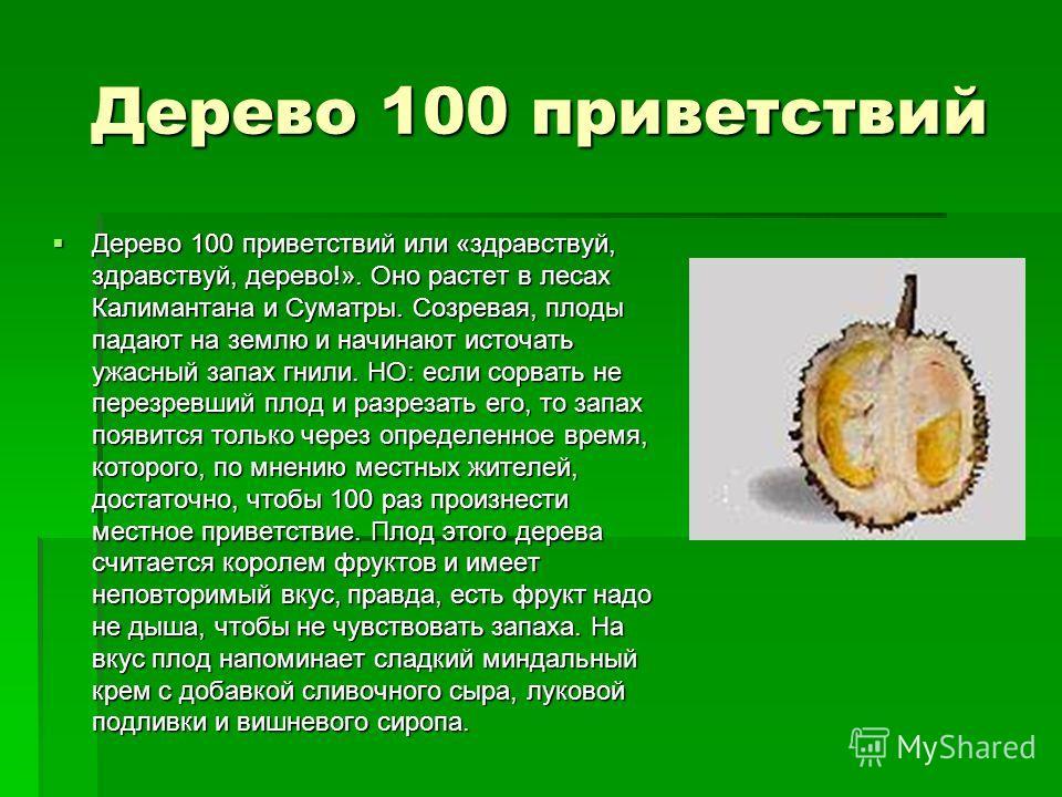 Дерево 100 приветствий Дерево 100 приветствий или «здравствуй, здравствуй, дерево!». Оно растет в лесах Калимантана и Суматры. Созревая, плоды падают на землю и начинают источать ужасный запах гнили. НО: если сорвать не перезревший плод и разрезать е