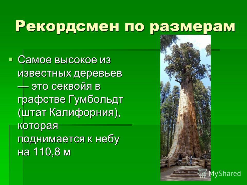 Рекордсмен по размерам Самое высокое из известных деревьев это секвойя в графстве Гумбольдт (штат Калифорния), которая поднимается к небу на 110,8 м Самое высокое из известных деревьев это секвойя в графстве Гумбольдт (штат Калифорния), которая подни
