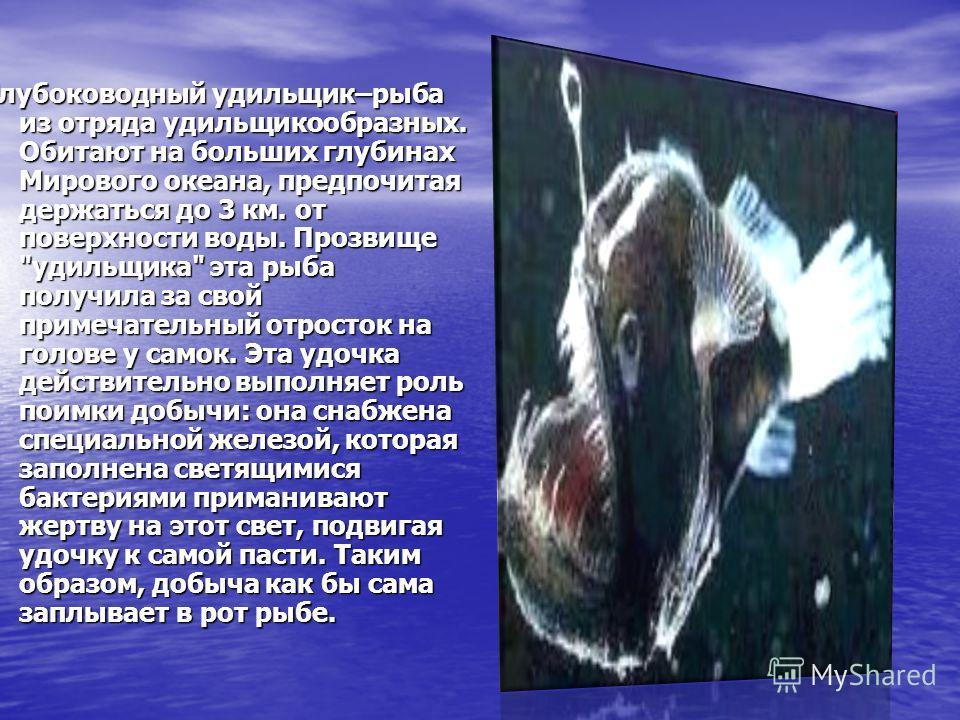 Глубоководный удильщик–рыба из отряда удильщикообразных. Обитают на больших глубинах Мирового океана, предпочитая держаться до 3 км. от поверхности воды. Прозвище