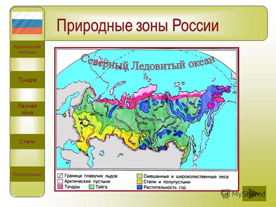 Арктические пустыни Тундра Лесная зона Степи Полупустыни