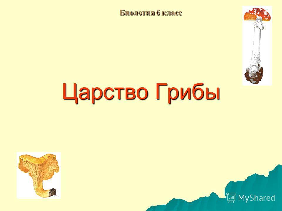 Царство Грибы Биология 6 класс