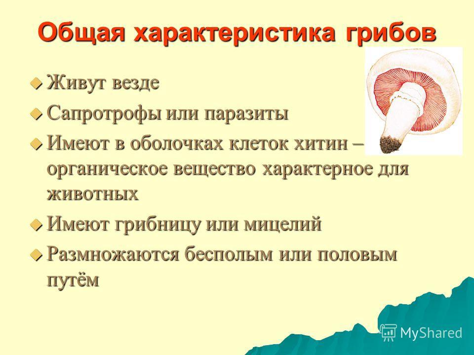 Общая характеристика грибов Живут везде Живут везде Сапротрофы или паразиты Сапротрофы или паразиты Имеют в оболочках клеток хитин – органическое вещество характерное для животных Имеют в оболочках клеток хитин – органическое вещество характерное для