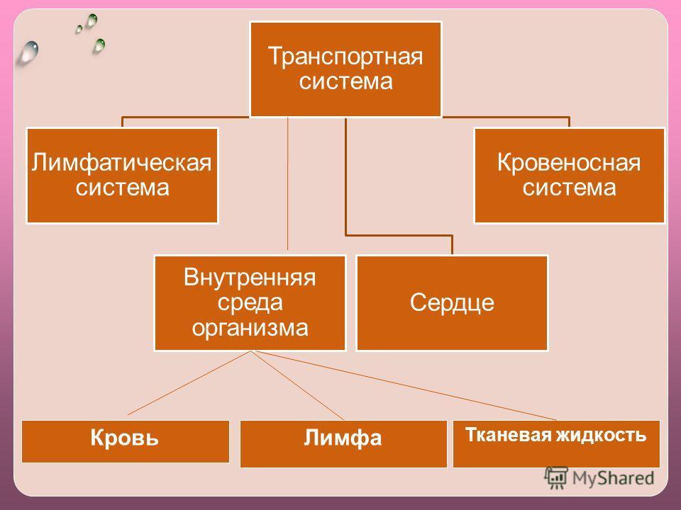 Транспортная система Кровеносная система Сердце Лимфатическая система Внутренняя среда организма КровьЛимфа Тканевая жидкость
