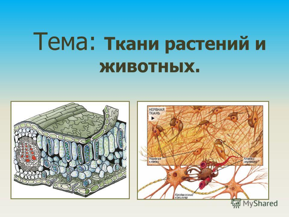 Доклад ткани растений и животных 1006