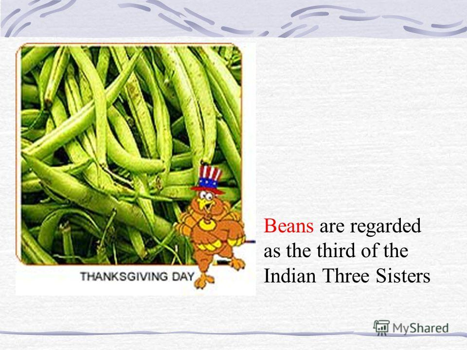 Beans are regarded as the third of the Indian Three Sisters
