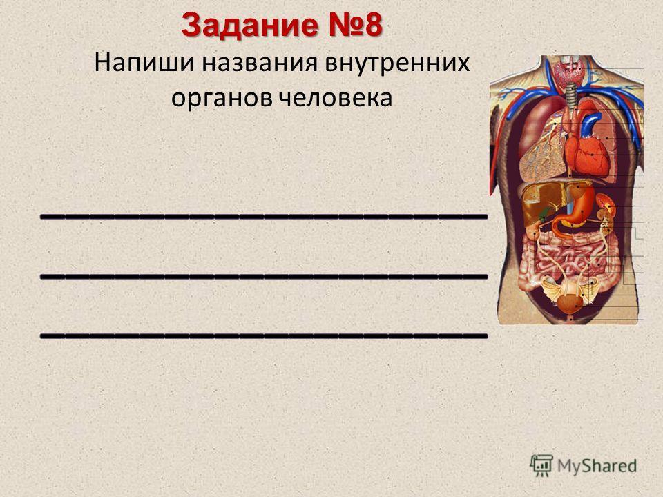 Задание 8 Напиши названия внутренних органов человека