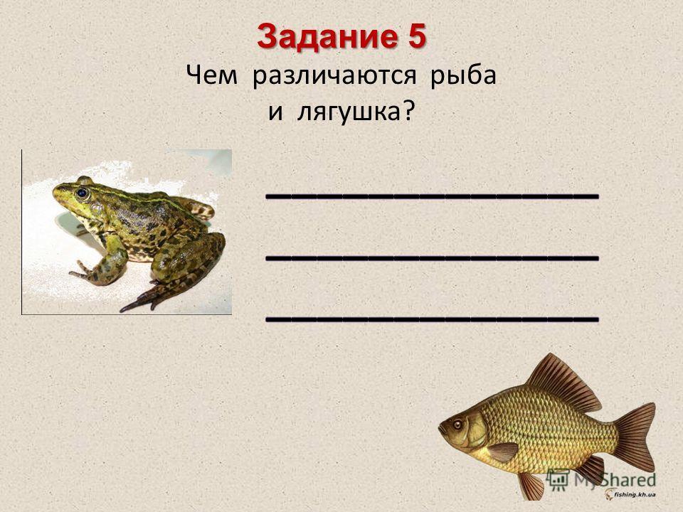 Задание 5 Чем различаются рыба и лягушка?