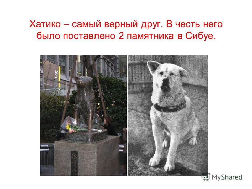 Хатико – самый верный друг. В честь него было поставлено 2 памятника в Сибуе.