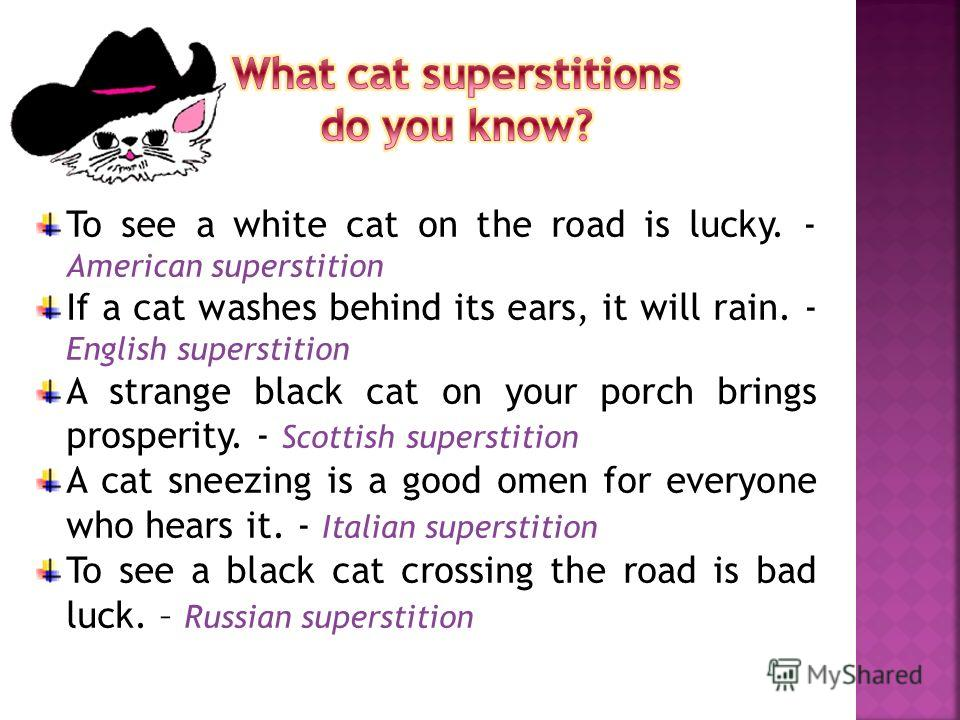 To see a white cat on the road is lucky. - American superstition If a cat washes behind its ears, it will rain. - English superstition A strange black cat on your porch brings prosperity. - Scottish superstition A cat sneezing is a good omen for ever