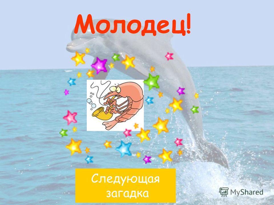 креветкакаракатица дельфин