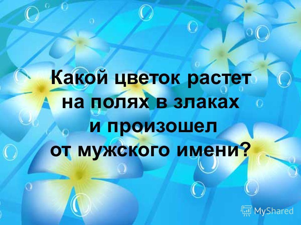 Какой цветок растет на полях в злаках и произошел от мужского имени?