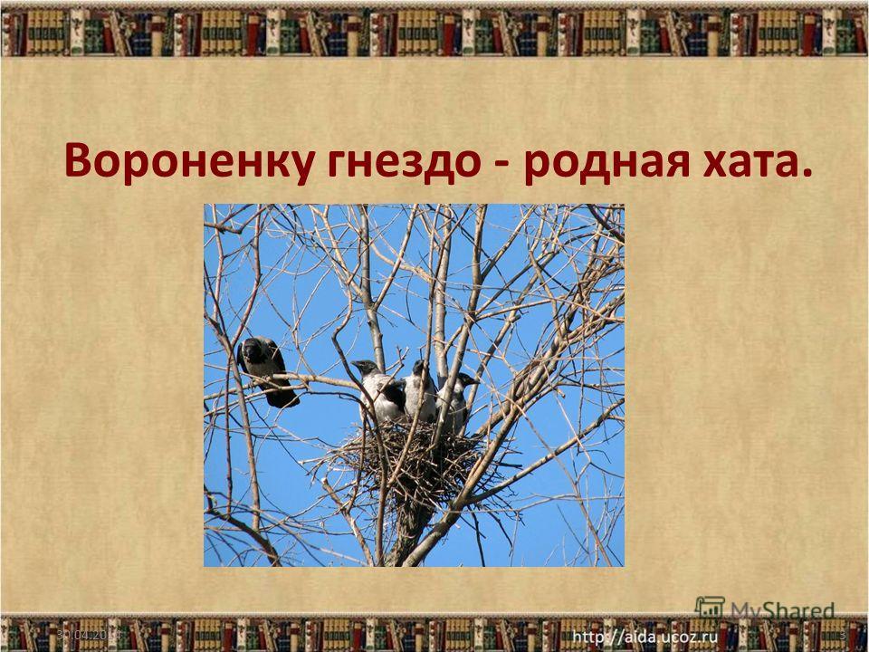Вороненку гнездо - родная хата. 30.04.20143