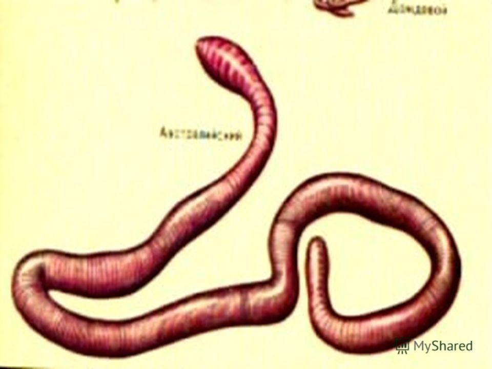 Дождевые черви, находясь в подземных норках, получают достаточное количество кислорода,путём его диффузии через влажную кожу.