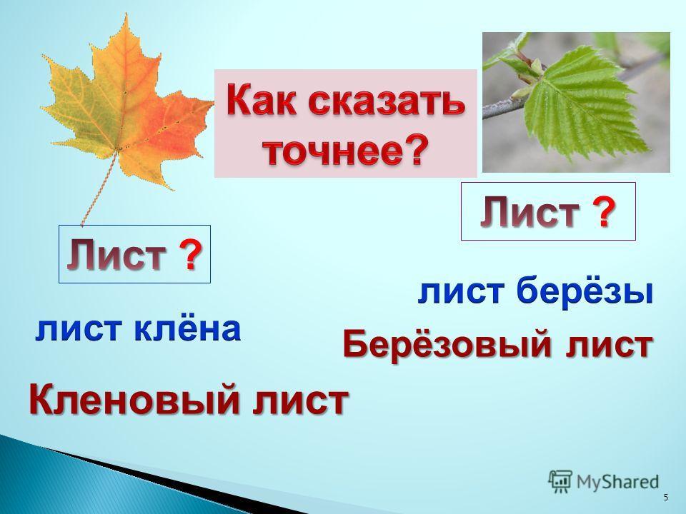 5 Кленовый лист Берёзовый лист