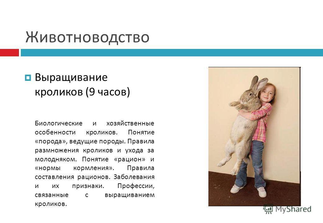 Животноводство Выращивание кроликов (9 часов) Биологические и хозяйственные особенности кроликов. Понятие «порода», ведущие породы. Правила размножения кроликов и ухода за молодняком. Понятие «рацион» и «нормы кормления». Правила составления рационов
