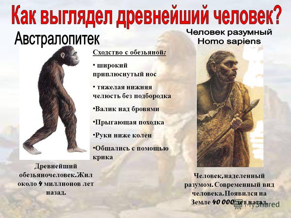 Древнейший обезьяночеловек. Жил около 4 миллионов лет назад. Человек, наделенный разумом. Современный вид человека. Появился на Земле 40 000 лет назад. Сходство с обезьяной : широкий приплюснутый нос тяжелая нижняя челюсть без подбородка Валик над бр