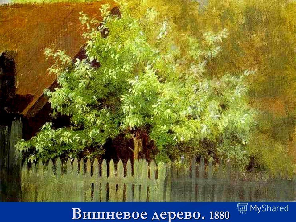 Вишневое дерево. 1880