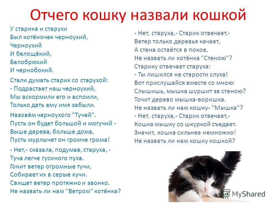 Сказка об умном мышонке Говорит мышонок Мурке: - Ну, тогда сыграем в …………! Завяжи глаза платком И лови меня потом.