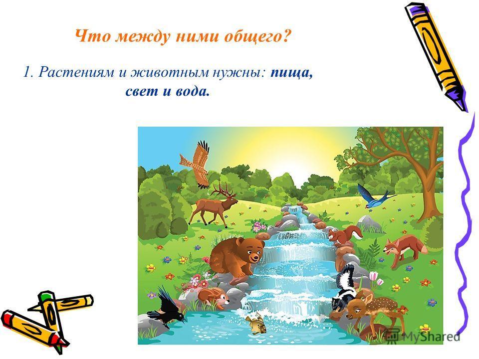 Что между ними общего? 1. Растениям и животным нужны: пища, свет и вода.