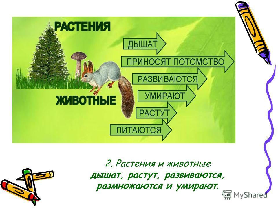 2. Растения и животные дышат, растут, развиваются, размножаются и умирают.