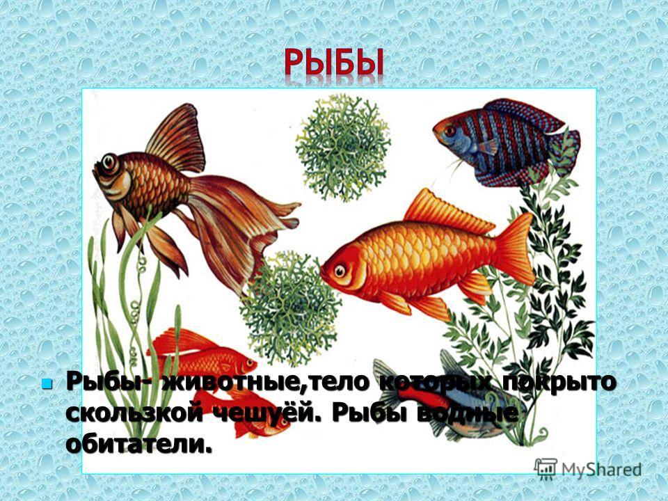 Рыбы- животные,тело которых покрыто скользкой чешуёй. Рыбы водные обитатели. Рыбы- животные,тело которых покрыто скользкой чешуёй. Рыбы водные обитатели.