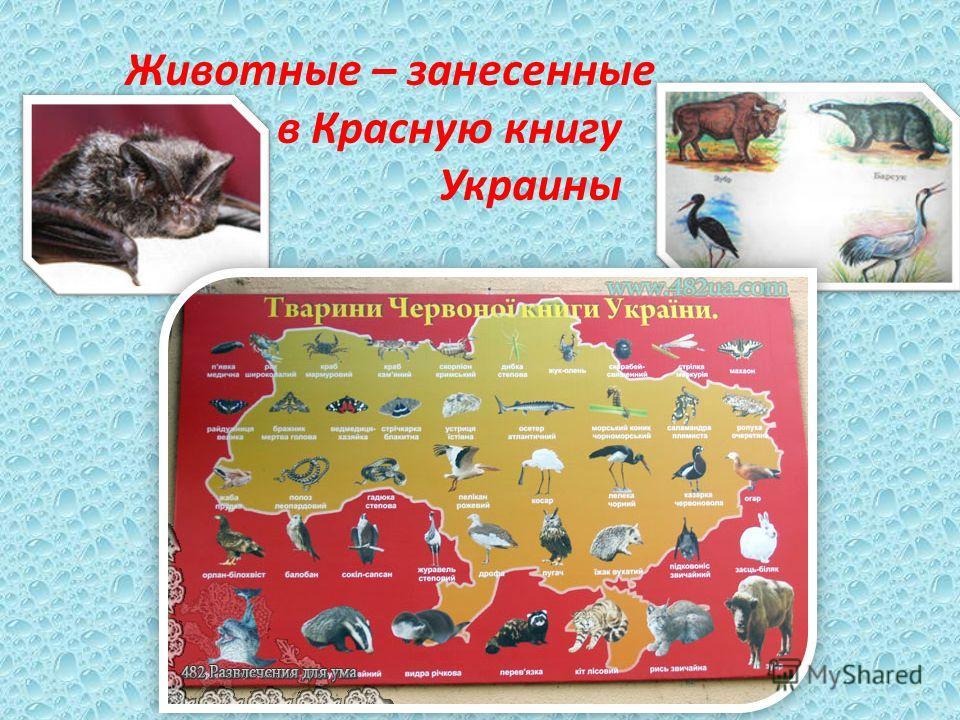 Животные – занесенные в Красную книгу Украины
