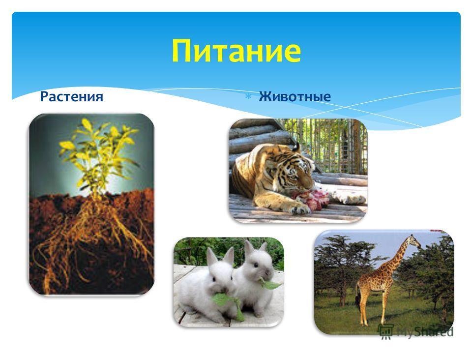 Питание Растения Животные
