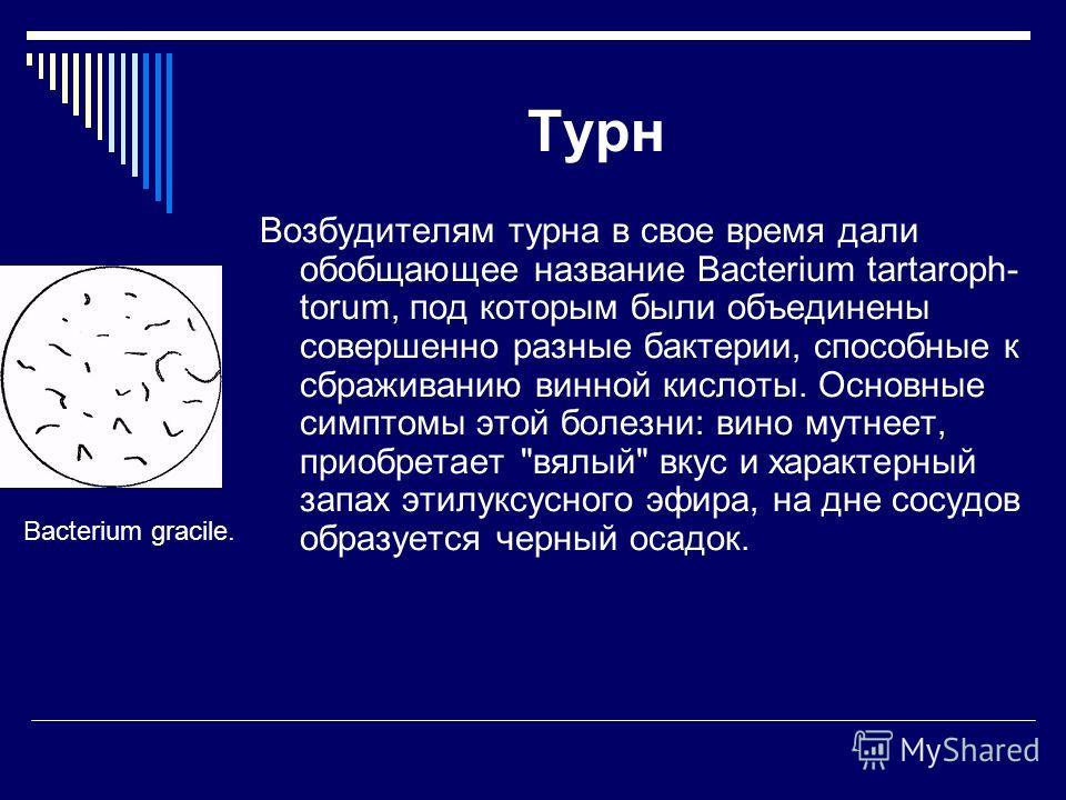 Турн Возбудителям турна в свое время дали обобщающее название Bacterium tartaroph- torum, под которым были объединены совершенно разные бактерии, способные к сбраживанию винной кислоты. Основные симптомы этой болезни: вино мутнеет, приобретает