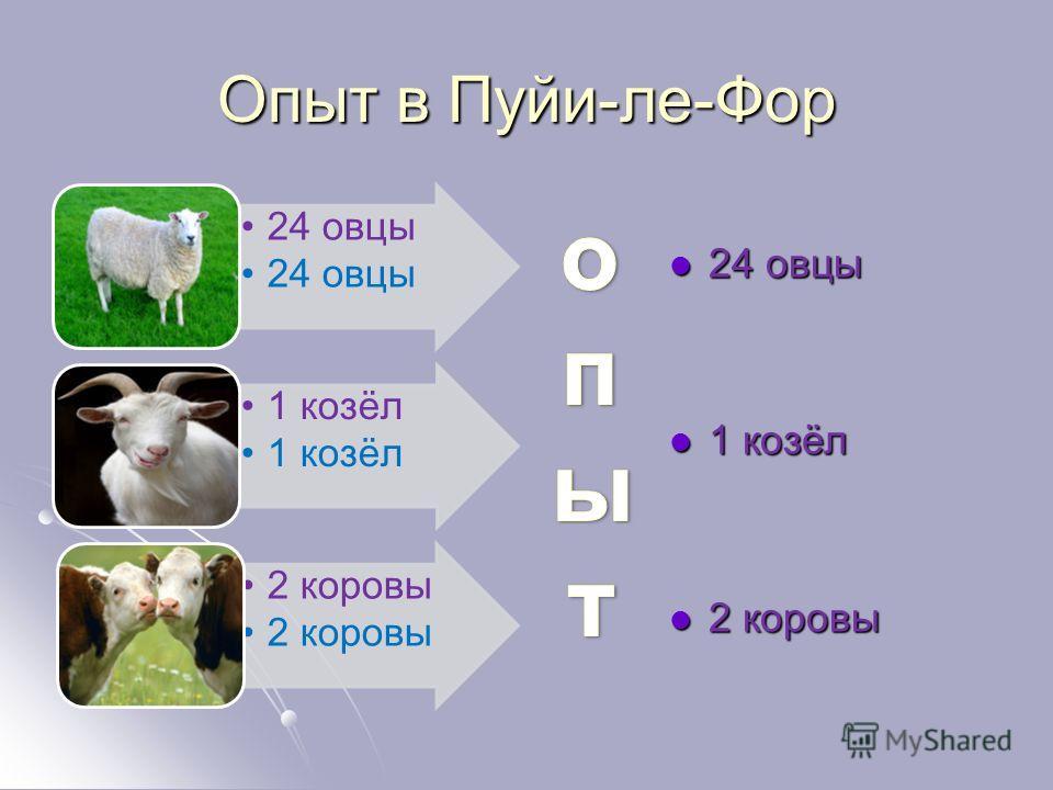 Опыт в Пуйи-ле-Фор 24 овцы 1 козёл 2 коровы 24 овцы 24 овцы 1 козёл 1 козёл 2 коровы 2 коровы