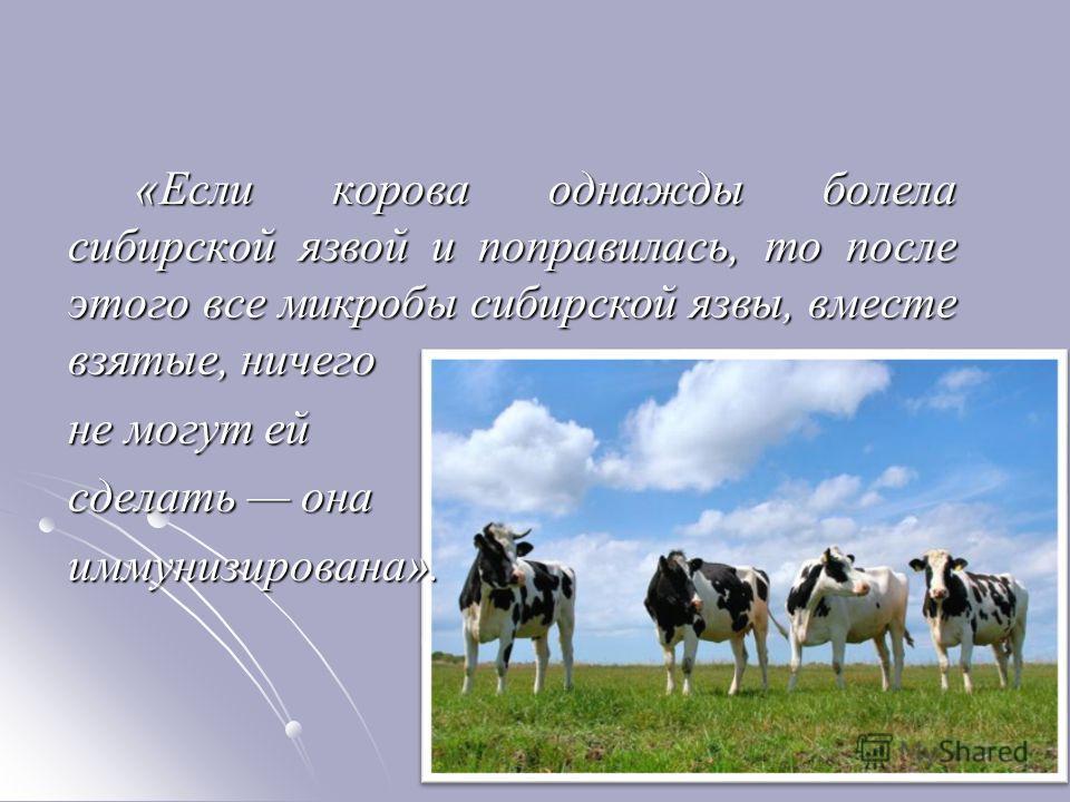 «Если корова однажды болела сибирской язвой и поправилась, то после этого все микробы сибирской язвы, вместе взятые, ничего не могут ей сделать она иммунизирована».