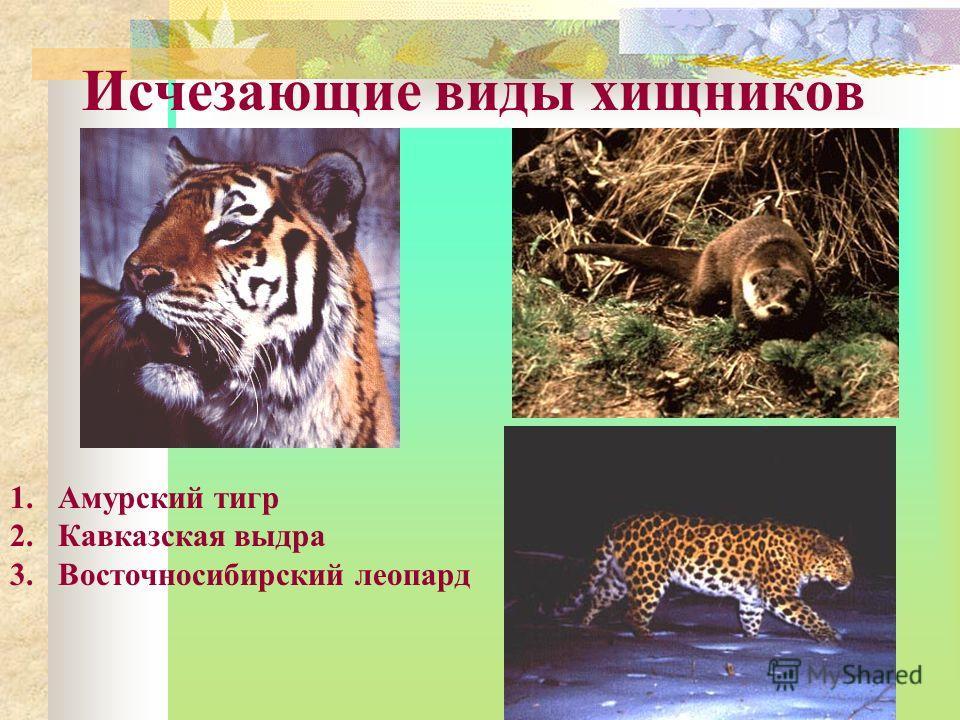 Исчезающие виды хищников 1.Амурский тигр 2.Кавказская выдра 3.Восточносибирский леопард