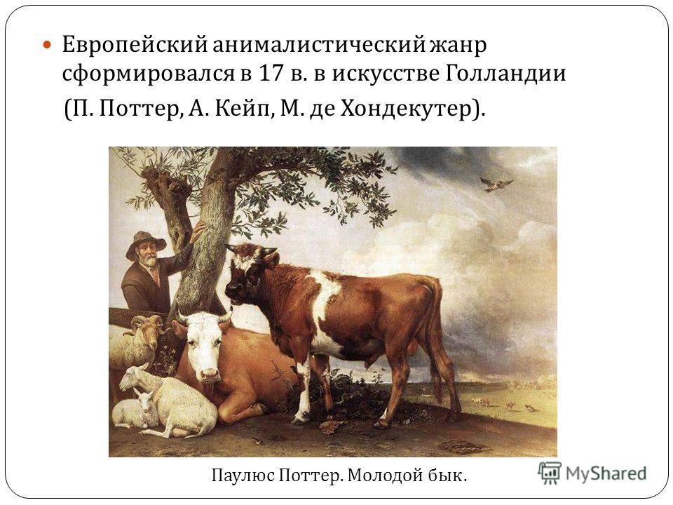 Европейский анималистический жанр сформировался в 17 в. в искусстве Голландии ( П. Поттер, А. Кейп, М. де Хондекутер ). Паулюс Поттер. Молодой бык.
