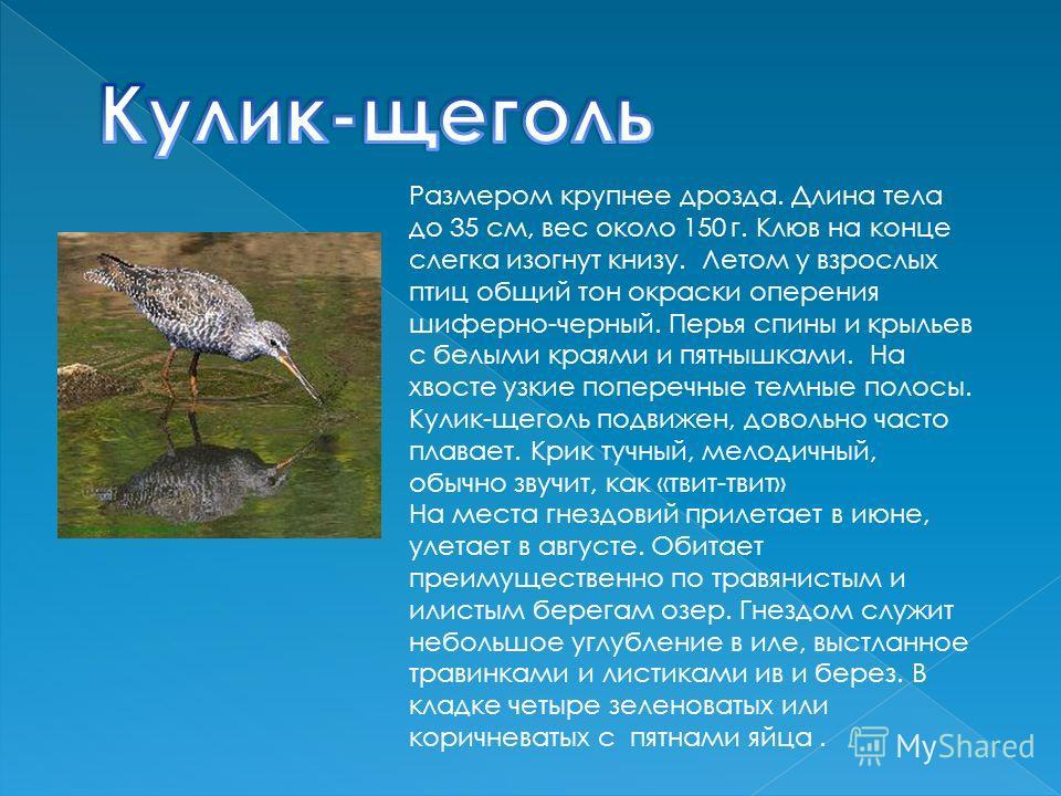 Размером крупнее дрозда. Длина тела до 35 см, вес около 150 г. Клюв на конце слегка изогнут книзу. Летом у взрослых птиц общий тон окраски оперения шиферно-черный. Перья спины и крыльев с белыми краями и пятнышками. На хвосте узкие поперечные темные