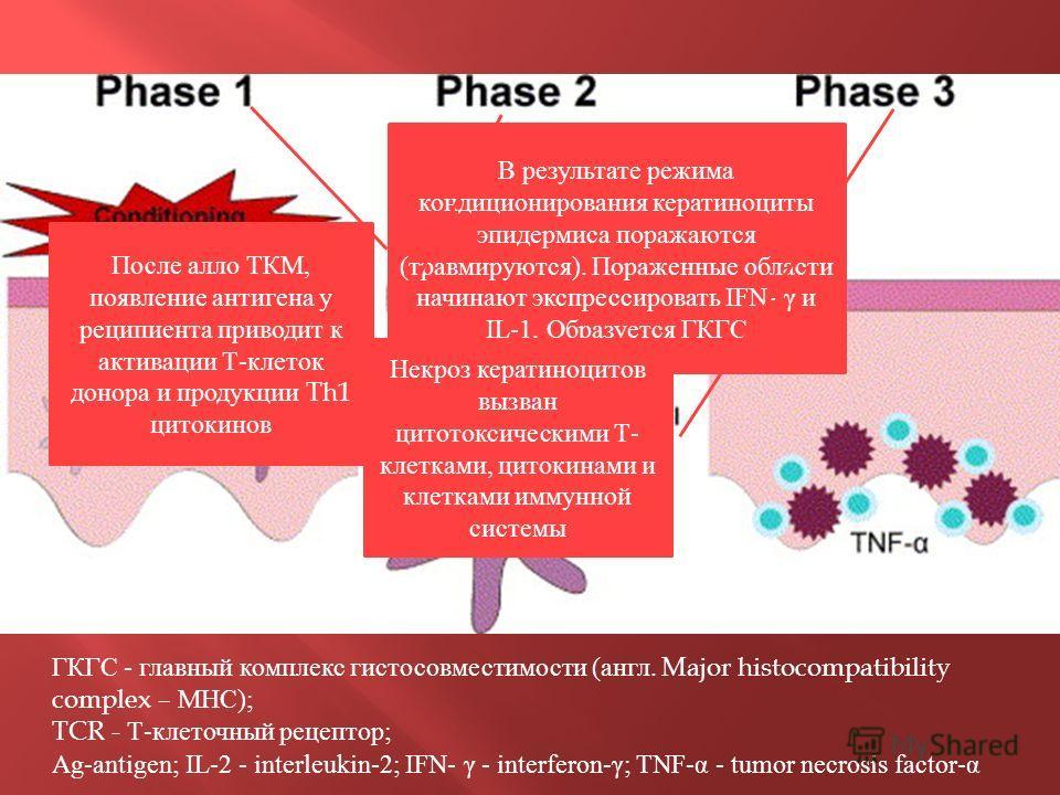 ГКГС - главный комплекс гистосовместимости ( англ. Major histocompatibility complex – МНС ); TCR - Т - клеточный рецептор ; Ag-antigen; IL-2 - interleukin-2; IFN- γ - interferon-γ; TNF-α - tumor necrosis factor-α В результате режима кондиционирования