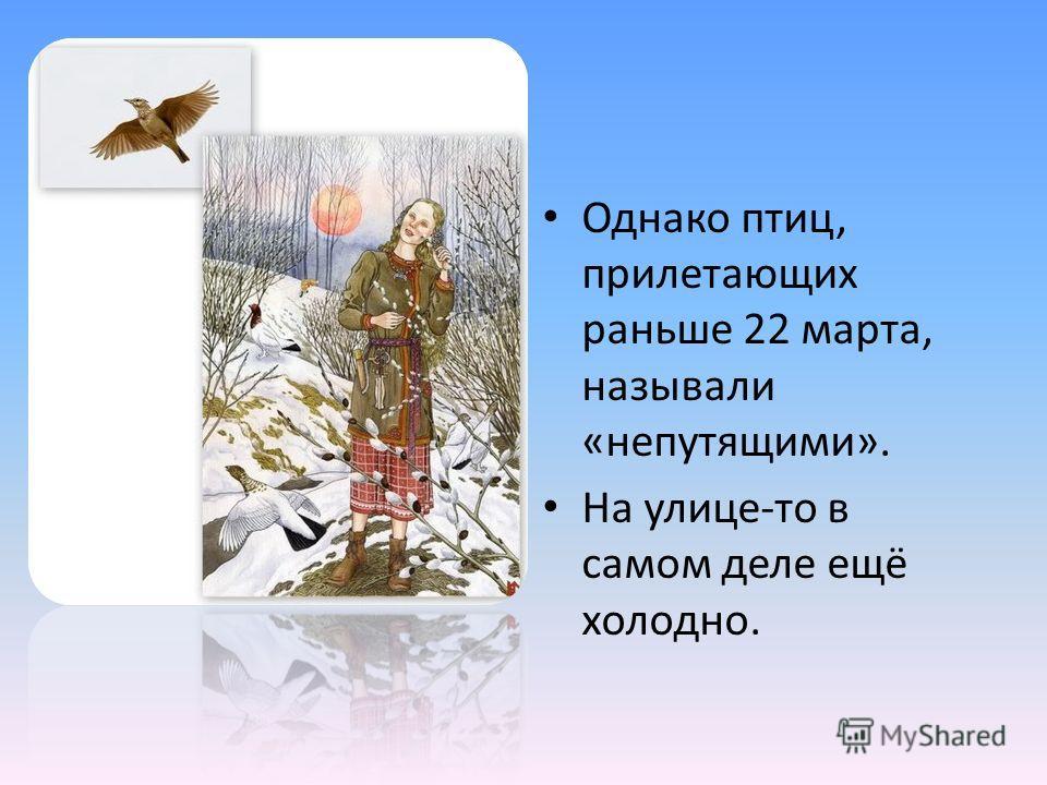 Однако птиц, прилетающих раньше 22 марта, называли «непутящими». На улице-то в самом деле ещё холодно.