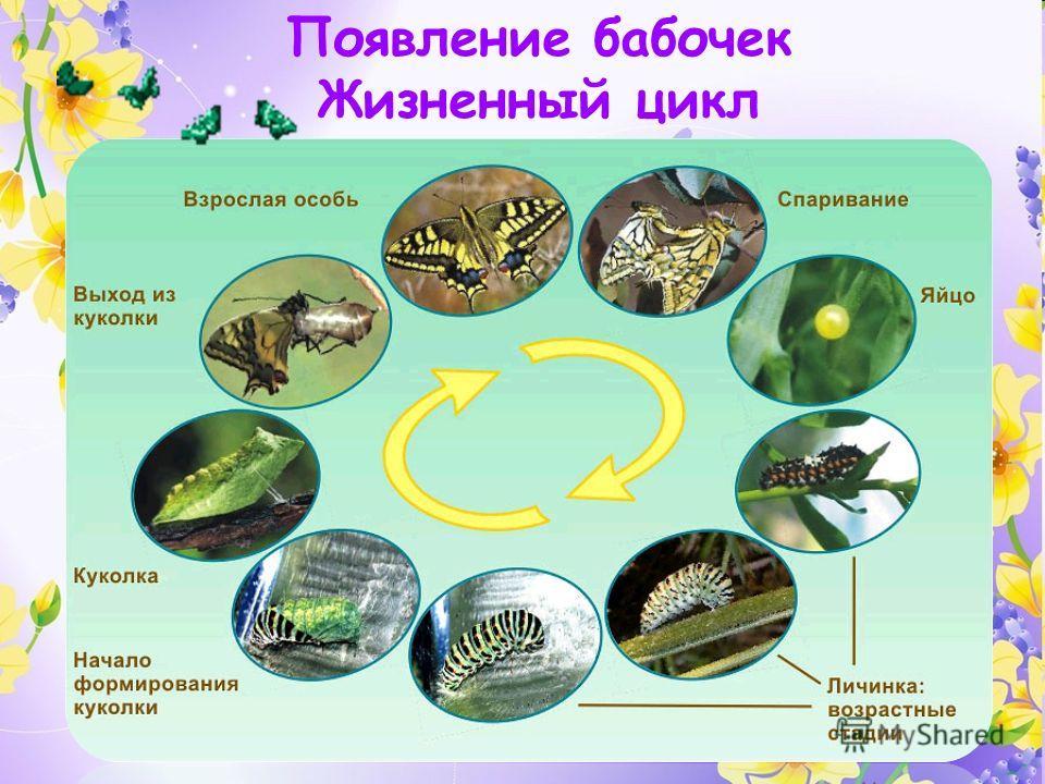 Появление бабочек Жизненный цикл