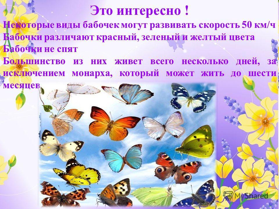 Это интересно ! Некоторые виды бабочек могут развивать скорость 50 км/ч Бабочки различают красный, зеленый и желтый цвета Бабочки не спят Большинство из них живет всего несколько дней, за исключением монарха, который может жить до шести месяцев