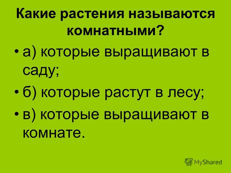 Какие растения называются комнатными? а) которые выращивают в саду; б) которые растут в лесу; в) которые выращивают в комнате.