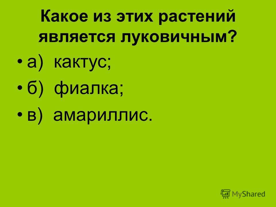 Какое из этих растений является луковичным? а) кактус; б) фиалка; в) амариллис.