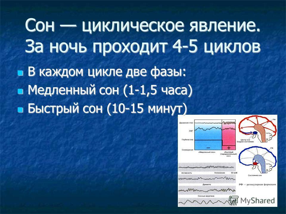 Сон циклическое явление. За ночь проходит 4-5 циклов В каждом цикле две фазы: В каждом цикле две фазы: Медленный сон (1-1,5 часа) Медленный сон (1-1,5 часа) Быстрый сон (10-15 минут) Быстрый сон (10-15 минут)