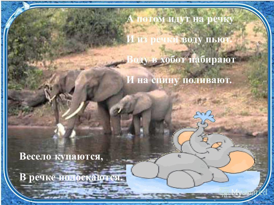 Весело купаются, В речке полоскаются. А потом идут на речку И из речки воду пьют. Воду в хобот набирают И на спину поливают.