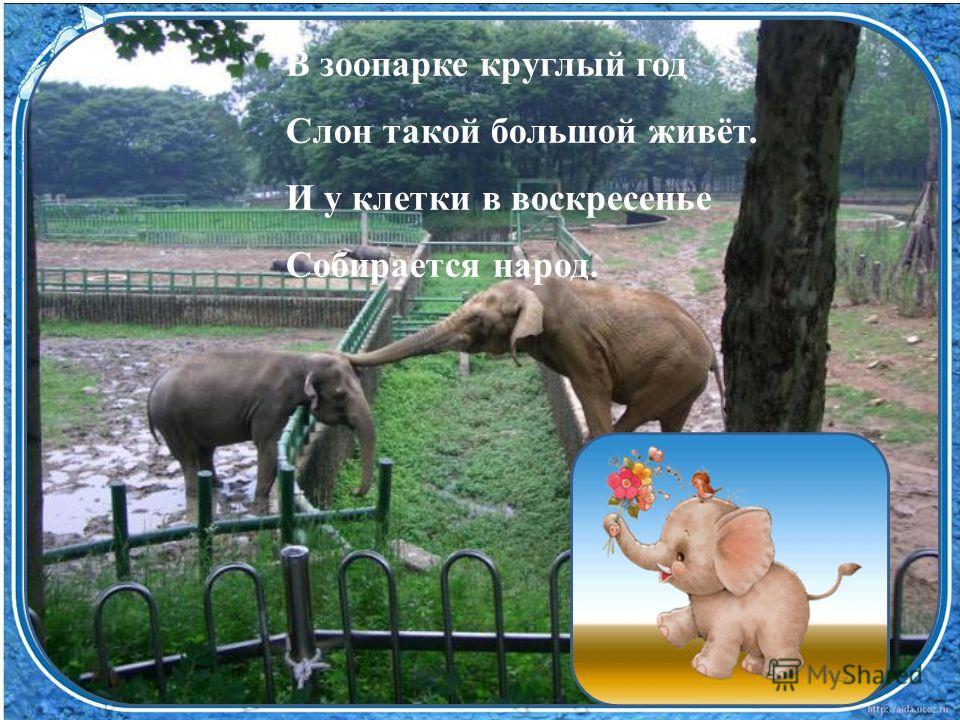 В зоопарке круглый год Слон такой большой живёт. И у клетки в воскресенье Собирается народ.